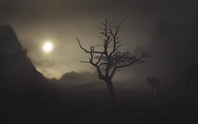 shadow, nature, Chile, dark, trees, mist