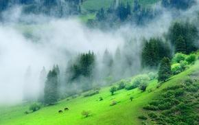 nature, forest, grass, hill, mist, landscape