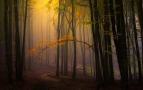 mist, trees, path, atmosphere, leaves, morning