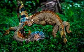 jungles, rainforest, Costa Rica, plants, animals, iguana