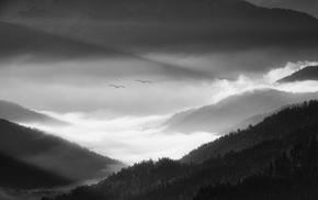 Germany, valley, monochrome, morning, landscape, mist