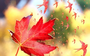 nature, depth of field, maple leaves, photo manipulation, flying, leaves