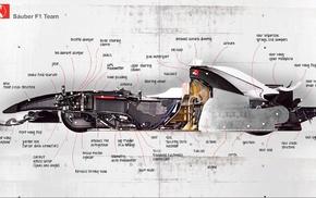 Cross Section, motorsports, Formula 1, sauber, race cars