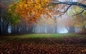 sunrise, park, leaves, mist, morning, landscape
