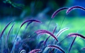 spikelets, plants, grass