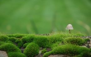 landscape, nature, depth of field, macro, field, moss