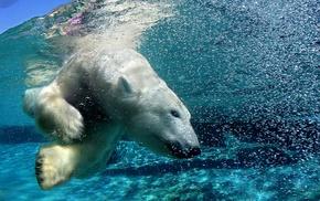 polar bears, animals, wildlife