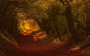 leaves, landscape, fall, tunnel, nature, foliage
