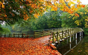 overcast, walkway, fall, trees, nature, landscape