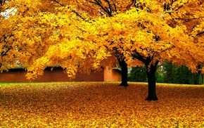 leaves, nature, yellow, trees, landscape, fall