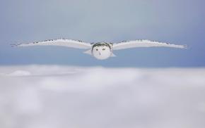 owl, nature, winter, animals