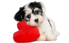 animals, puppies, simple background, pet, hearts, baby animals