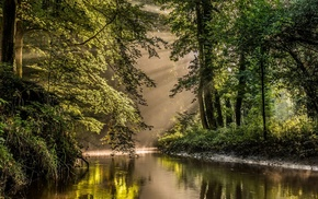 nature, trees, sun rays, river, forest, shrubs