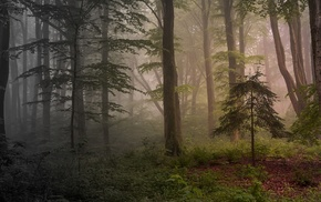 trees, shrubs, landscape, mist, nature, morning