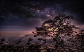 stars, water, nature, trees, night, Milky Way