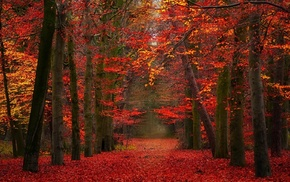 red, yellow, trees, nature, fall, landscape