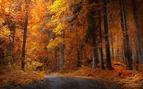 fall, forest, yellow, road, landscape, trees