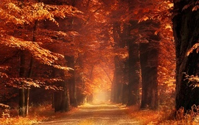 trees, landscape, sunlight, mist, forest, sun rays