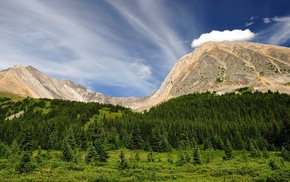 trees, landscape, nature, hill, pine trees, clouds