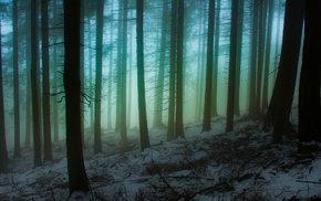 sunrise, nature, snow, atmosphere, forest, winter
