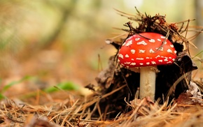 mushroom, forest, nature
