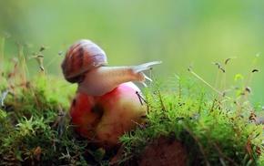 macro, snail, fruit, moss