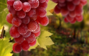 fruit, grapes, wet, macro