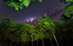 trees, nature, star trails, forest, plants