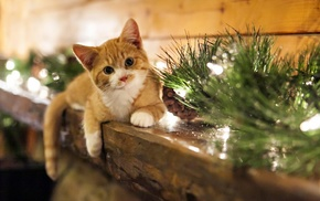 decorations, cat, animals, Christmas ornaments, mammals