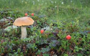 plants, macro, mushroom