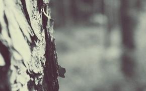 macro, winter, snow, trees, depth of field