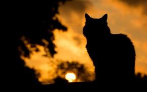 silhouette, cat