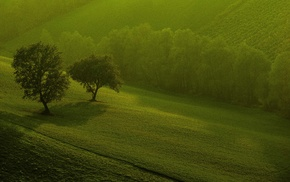 landscape, trees, grass