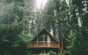 trees, forest, house, Vacations
