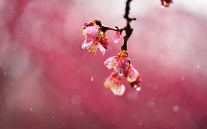 nature, plants, macro, blossoms, depth of field