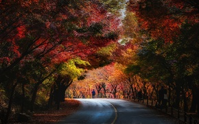 blue, people, trees, red, fall, nature