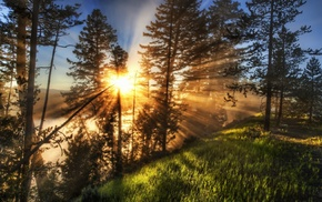 mist, trees, sun rays, Yellowstone National Park, sunrise, landscape