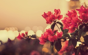 flowers, red flowers