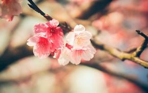 blossoms, macro
