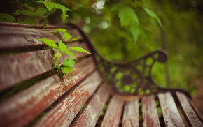 bench, plants, macro, orchids