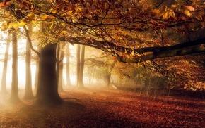sunlight, leaves, atmosphere, sunrise, nature, trees