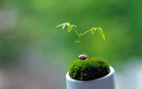 macro, plants