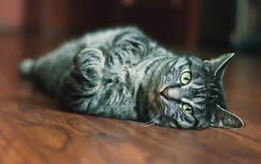 cat, animals, indoors