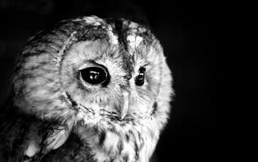 birds, animals, owl