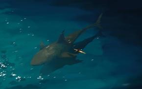 shark, animals, fantasy art