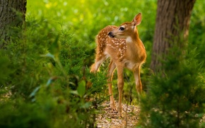 deer, mammals, animals, nature