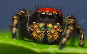 animals, spider, macro