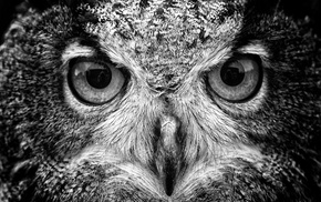 birds, animals, owl, macro