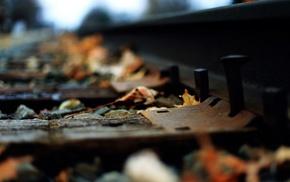 railway, leaves, macro, depth of field