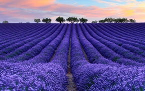nature, photography, colorful, lavender